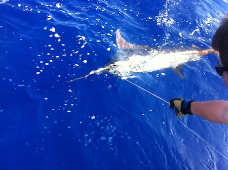 Hawaii marlin fishing maggie joe sport fishing oahu deep for Deep sea fishing oahu