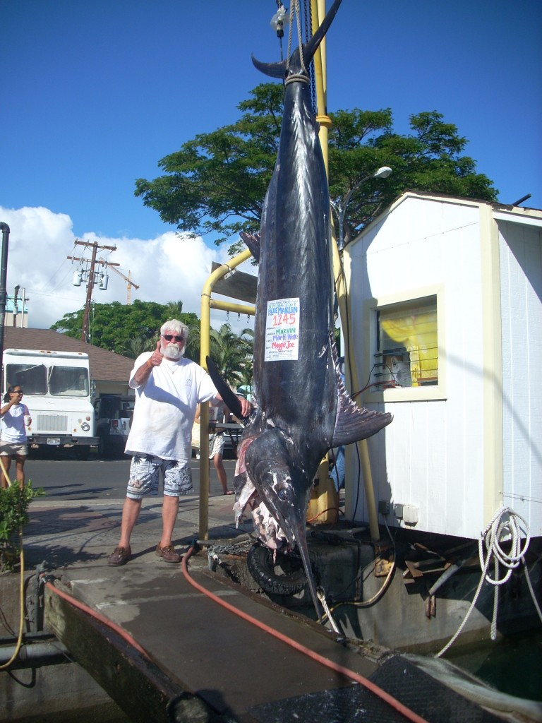 1245 lb Pacific Blue Marlin