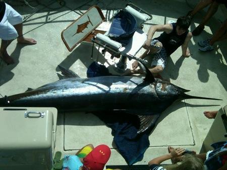 Waikiki Deep Sea Fishing Marlin