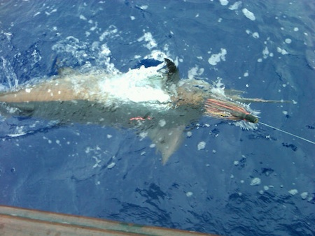 hawaii deep sea fishing tournament