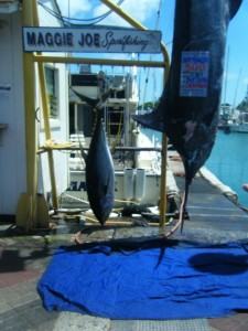 135 lb Ahi and 606 lb Blue Marlin (tag incorrect)