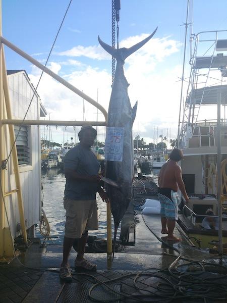 275 lb Blue Marlin