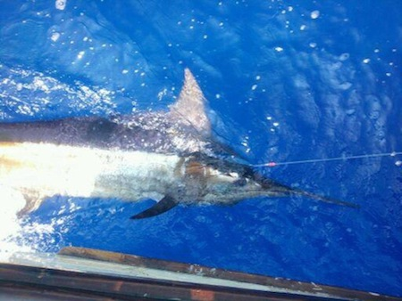 hawaii deep sea fishing charter kona