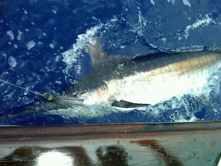 honolulu deep sea fishing