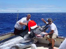 Our 1000 lb marlin getting in the Christmas spirit!