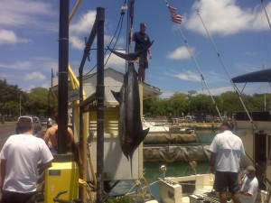 Hoisting 425 lb Marlin up from Sea Hawk