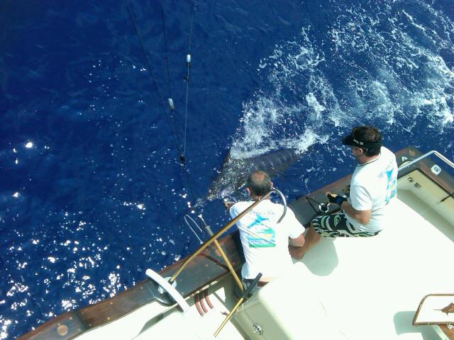 kona sport fishing charter