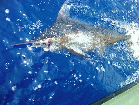 kona, hawaii deep sea fishing charter