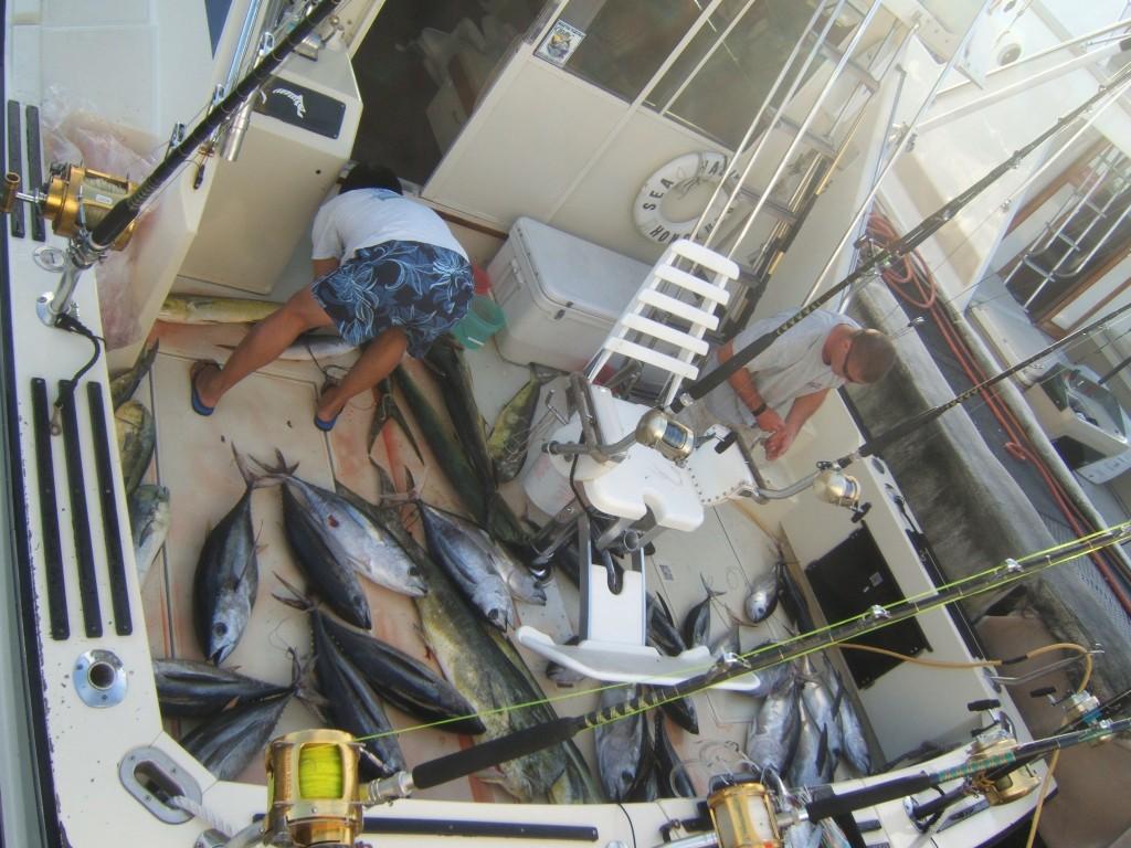 sea-hawk_mahi-aku_43-fish-in-total